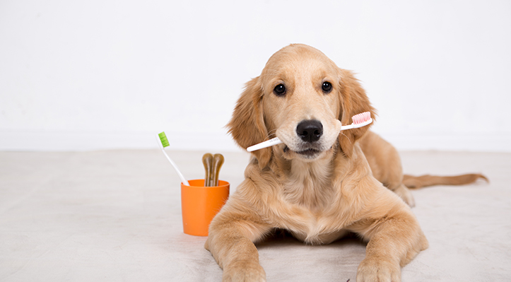 Dog with the toothbrush